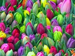 mercado-de-las-flores-1