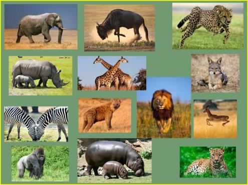 África faunao
